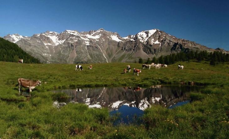 Il Parco Nazionale dello Stelvio si estende nel cuore delle Alpi centrali e  comprende l intero massiccio montuoso dell Ortles-Cevedale con le sue  vallate ... 5b8ffa824e30