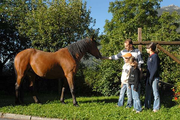 Cavalli il trentino dei bambini for Cavalli in vendita in trentino