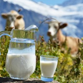 Jug of milk against herd of cows. Switzerland