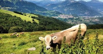 Monte-Baldo-iltrentinodeibambini