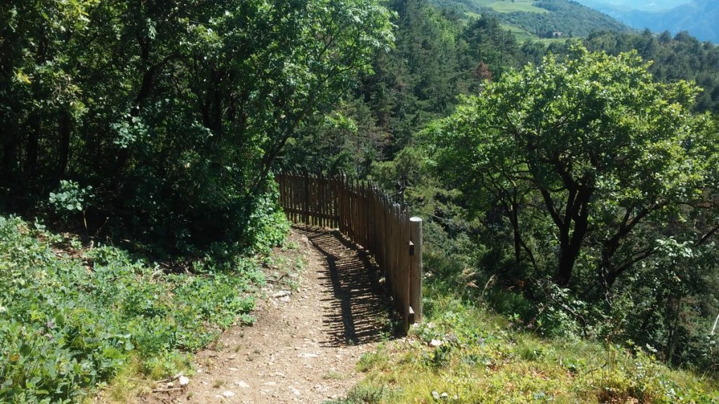 passeggiata nel bosco - san Michele (4)